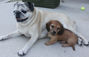 Sophie and her big sis, Pudgy