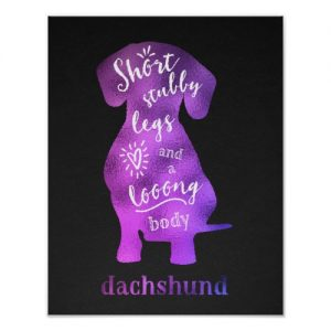 Dachshund – Short Stubby Legs and a Long Body Poster